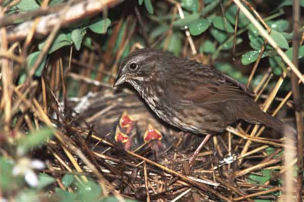 Image result for sparrow nest
