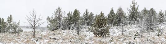Steens Snow
