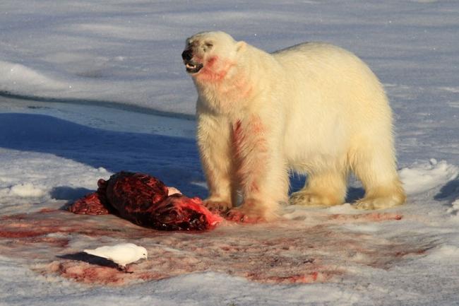 Bear Kill