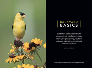 Goldfinch Opener